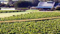 Private Hunter Valley Day Trip from Sydney Including Wine, Chocolate and Cheese Tasting