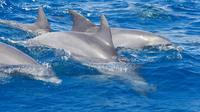 Private Port Stephens Day Trip from Sydney including Dolphin Cruise Private Car Transfers