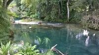 Private Tour: Blue Hole and Fern Gully Rain Forest Adventure from Negril