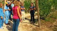 Wine Tour And Wine Tasting In A Vinho Verde Estate