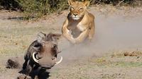 Chobe National Park Camping Safari from Kasane