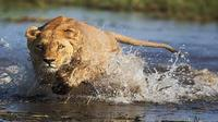 Victoria Falls To Okavango Delta Tour