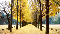 Petit France and Nami Island Full-Day Tour from Seoul