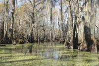 New Orleans Swamp Tour Boat Adventure With Pickup