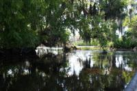 Small Group Airboat Swamp Tour