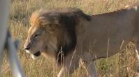 guaranteed to see the Big Cats on this safari*