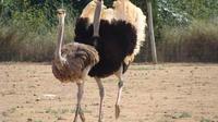 Ostrich Farm Visit in Mallorca