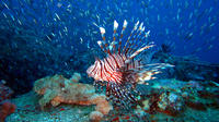 Racha Yai Dive Trip from Phuket