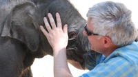 2-Day Elephant Experience from Chiang Mai