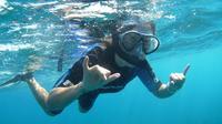 Kealakekua Bay Snorkel and Coastal Adventure