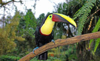 Bird Watching Near the Arenal Volcano
