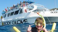 Snorkel Dolphin Adventure aboard Luxury Catamaran