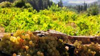 Half-Day Tour Around Athens: Vineyards on the Trails of Classical Greece