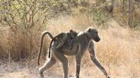 2-Day Chalet Kruger Park Safari from Johannesburg
