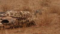 2-Day Pilanesberg Safari with Chalet from Johannesburg