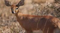 3-Day Chalet Kruger Park Safari from Johannesburg