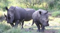 3-Day Tented Pilanesberg Safari from Johannesburg