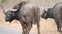 Pilanesberg Walking Safari from Johannesburg