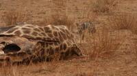 Private Tour: 2-Day Chalet Pilanesberg Safari from Johannesburg