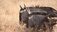 Private Tour: 3-Day Chalet Pilanesberg Safari from Johannesburg