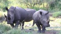 Private Tour: 3-Day Tented Pilanesberg Safari from Johannesburg