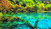 Private 5-Day Chengdu and Jiuzhaigou Guided Tour