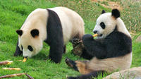 Private Chengdu Impression Day Tour including Chengdu Panda Base