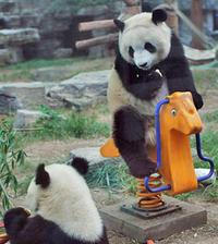 Private Day Tour: Chengdu Panda and Leshan Buddha