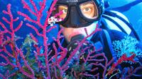 Half-day Boat Trip with Scuba Diving and Snorkeling in the Cyclop