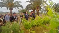 Mallorca Half Day Private Wine Tour with Wine Tasting