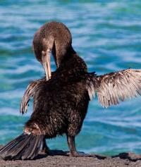 Galapagos Islands Luxury Cruise: 6-Day Tour with a Naturalist Aboard the 'Odyssey'
