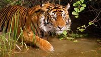 8-Day Private Golden Triangle Tour with a Ranthambore Wildlife Safari From Delhi