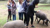 Aracena from Seville: Pig Farm Visit and Village Walk