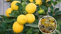 Small Group Hiking Tour to a Lemon Farm with Tastings