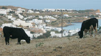 Discover Authentic Mykonos