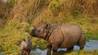 10-Night Trekking Tour Including Chitwan National Park from Kathmandu
