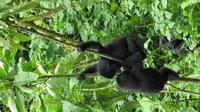 3-Day Gorilla Tracking Tour