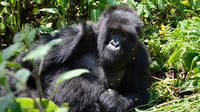 3-Day Gorilla Tracking Tour