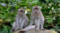 Private Ubud Tour: Batubulan Village, Tirta Empul Temple, Monkey Forest with Lunch