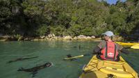 Full-Day Abel Tasman Relaxed or Late Riser Kayaking