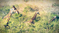 Hluhluwe-Imfolozi Game Reserve Guided Day Tour from Durban