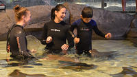 Ripley's Aquarium of Canada: Stingray Experience
