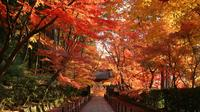 Autumn Leaves: Day Trip to 3 Scenic Temples in Kyoto from Osaka
