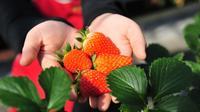 Seasonal: Strawberry Farm and Ashikaga Flower Park Illumination Show