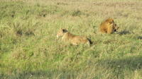 7-Day Safari: Serengeti Ngorongoro Crater and Zanzibar Island from Arusha