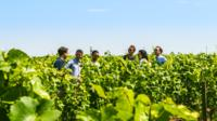 Small-Group Champagne Tour from Epernay