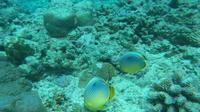 Undersea Trekking from Grand Baie - , , Mauritius