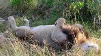 Nairobi Multi-Day Tour of Safari