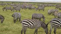 2-Night Masai Mara Safari From Mombasa