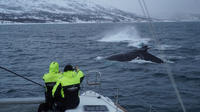 Northern Lights and Whale Safari by Catamaran from Tromso